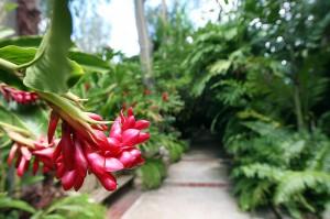 olimpia-water-park-botanical-garden